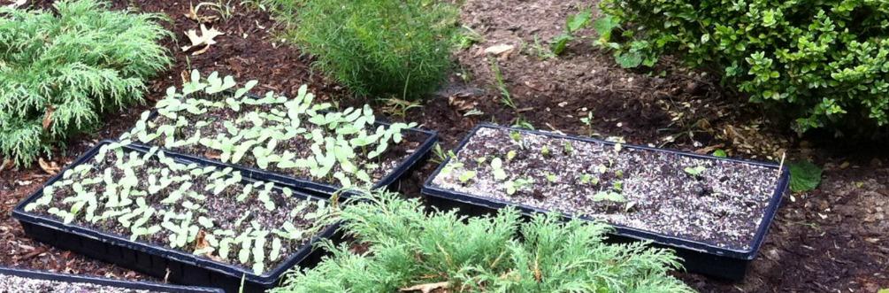 new-seedlings