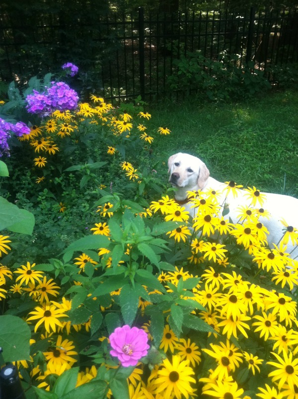 Sadie smelling the flowers