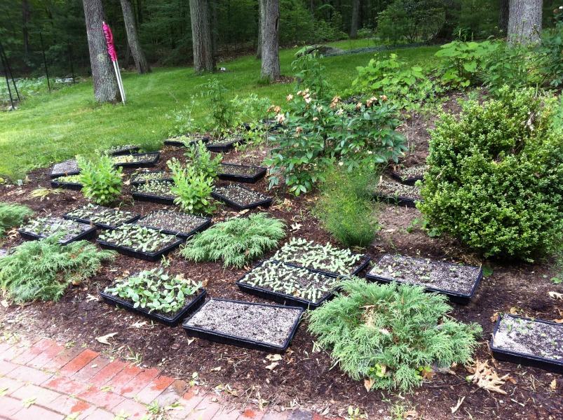 seedlingsamongstlandscaping