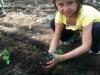 Mei planting kale