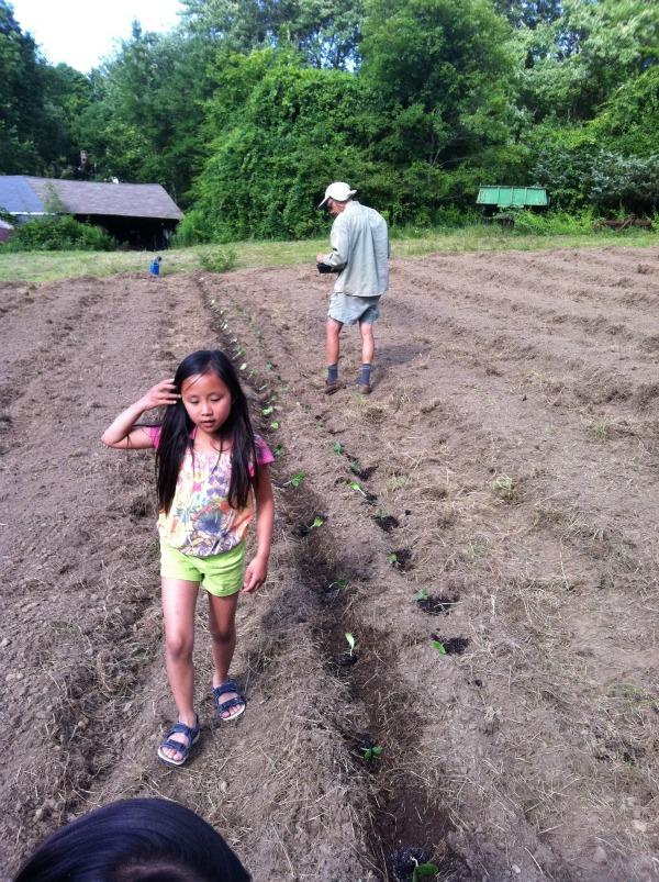 Transplanting at Pond St