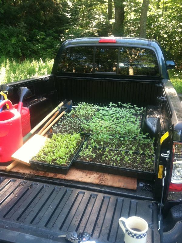 Transporting seedlings