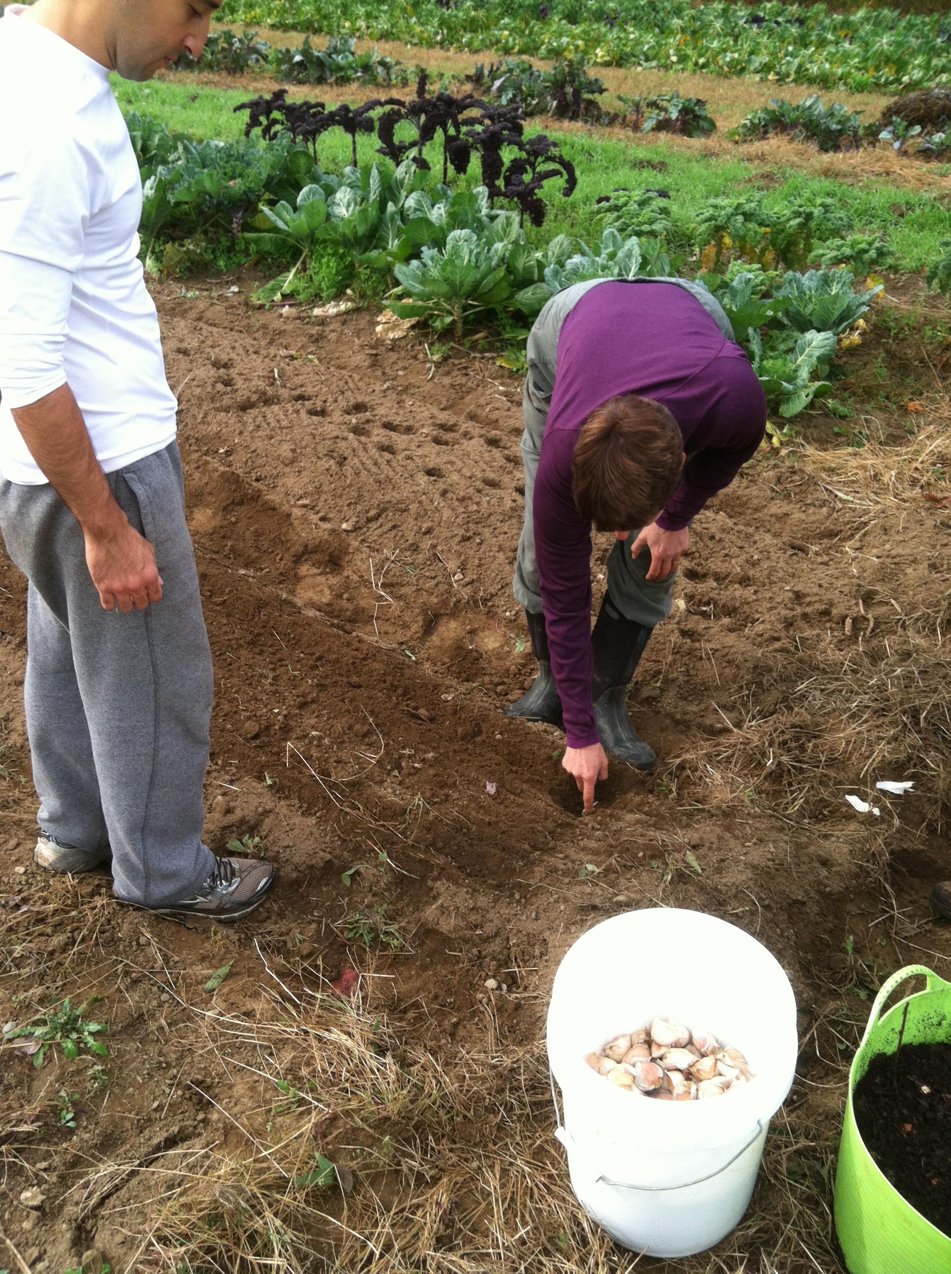 Planting cloves