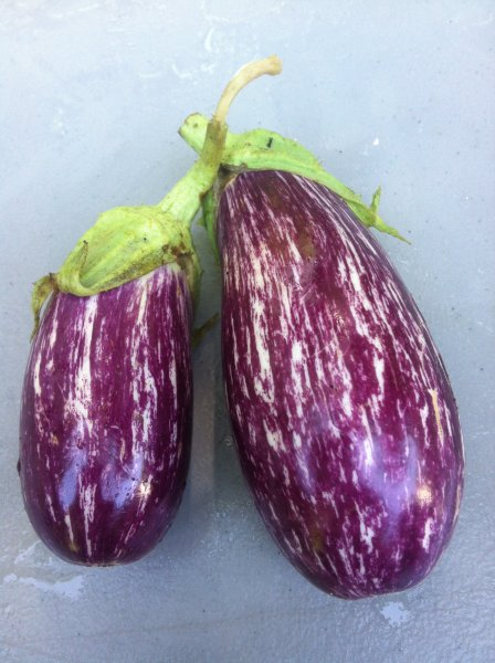 Listada eggplant