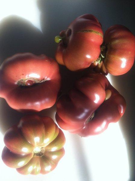 Purple Calabash Tomato