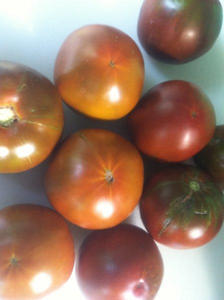 Nyagous Tomato