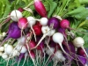 Radishes, St. Valentine Mix